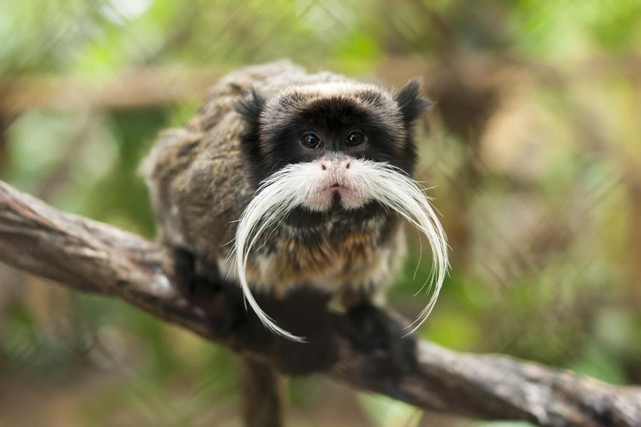 10 Наистина Уникални Животни, Които В Действителност Няма Да Повярвате, Че Съществуват 58