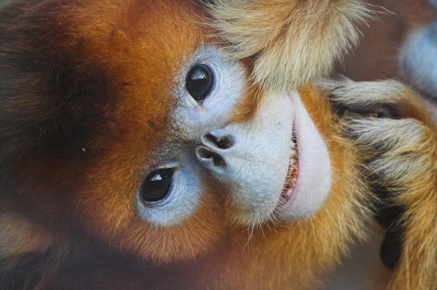 10 Наистина Уникални Животни, Които В Действителност Няма Да Повярвате, Че Съществуват 56