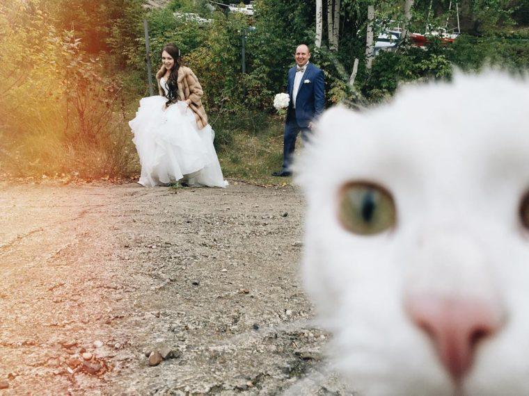 18 Младоженци, Които Избраха Забавното Пред Скучното В Снимките Си И Ефекта Е..... 34