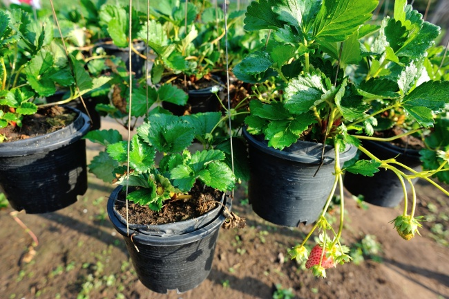 12 Готини Идеи За Оригинален Двор, За Който Всеки Градинар Мечтае 13