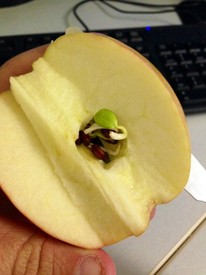 15 Ужасяващи Снимки, Които Показват Какво Се Случва, Когато Плодовете И Зеленчуците Започнат Да Поникват Рано 12