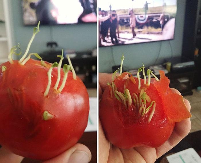 15 Ужасяващи Снимки, Които Показват Какво Се Случва, Когато Плодовете И Зеленчуците Започнат Да Поникват Рано 8
