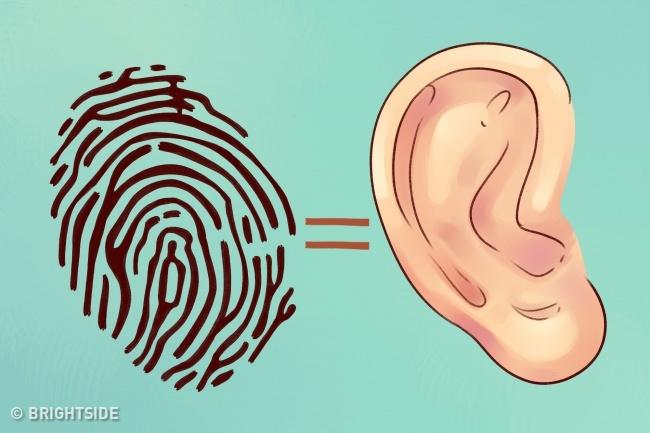 Какво Разкриват Ушите Ни За Нас? 33