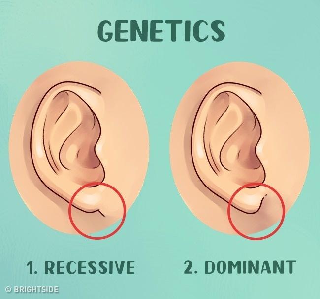 Какво Разкриват Ушите Ни За Нас? 34
