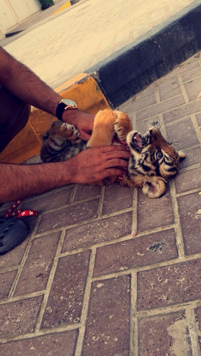 15 Снимки На Неприличния Лукс В Дубай 61