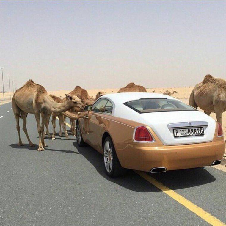 15 Снимки На Неприличния Лукс В Дубай 64