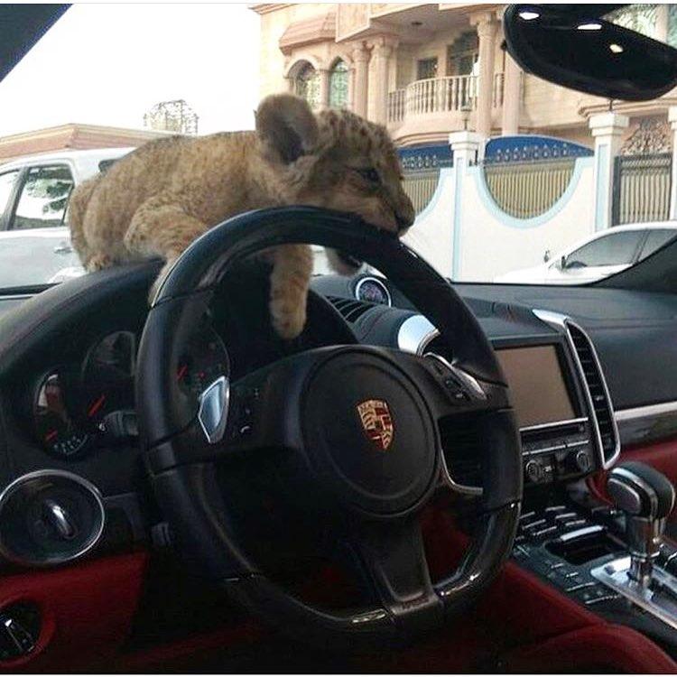 15 Снимки На Неприличния Лукс В Дубай 60
