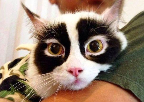 Котки С Едни От Най-Интересните Маркировки По Козината Си 34