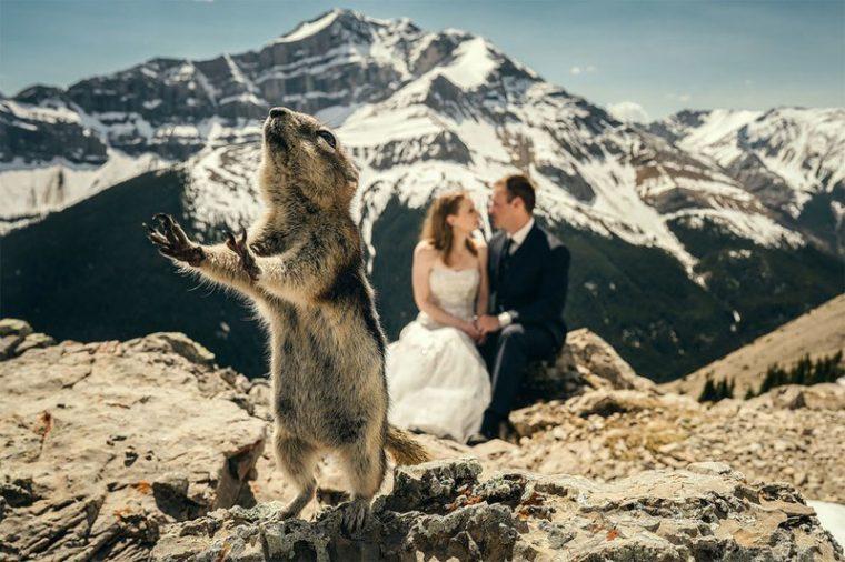 ПОТРЕС! Тези животни провалиха сватбените снимки на тези 11 сватбари.. 33