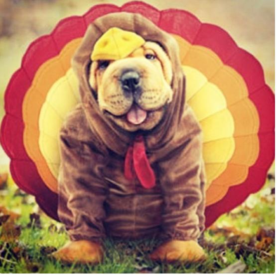Вижте как празнуват различни празници тези домашни животни.. Да ти напълни душата човече.. 10