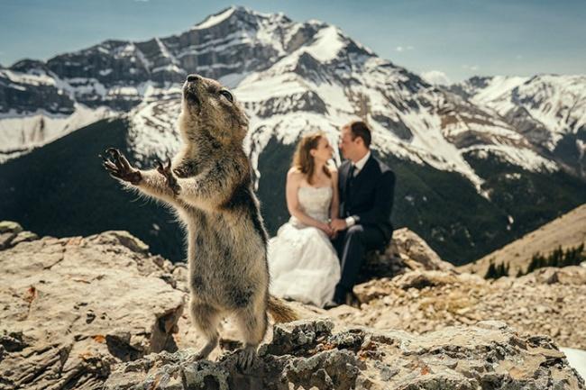 Най-добрите фотомомби, които направиха тези сватби още по-запомнящи се! 37