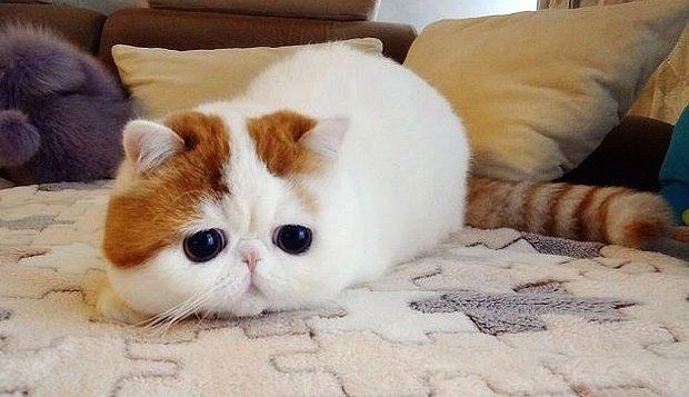 Това са най-известните котки на земята. Няма да повярвате колко различни са.. 62