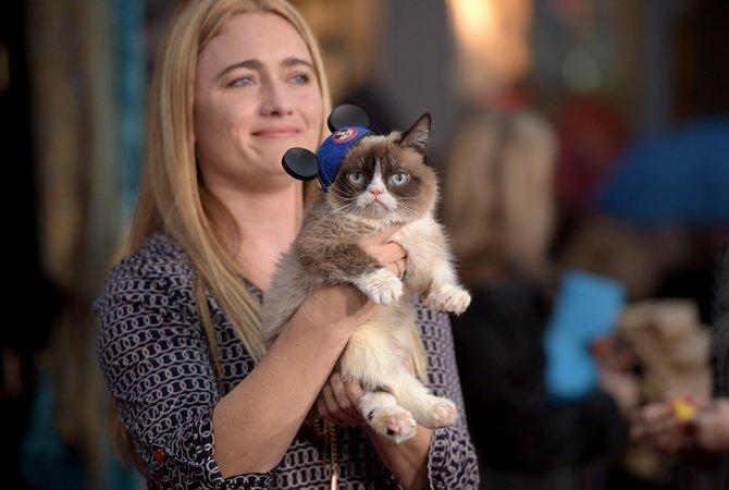 Това са най-известните котки на земята. Няма да повярвате колко различни са.. 71