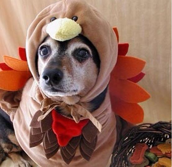 Вижте как празнуват различни празници тези домашни животни.. Да ти напълни душата човече.. 56