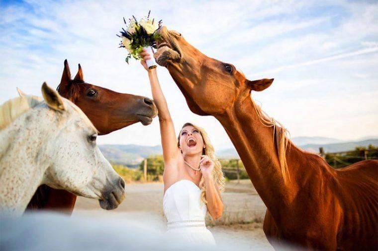 ПОТРЕС! Тези животни провалиха сватбените снимки на тези 11 сватбари.. 36