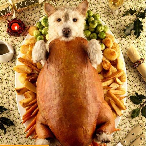 Вижте как празнуват различни празници тези домашни животни.. Да ти напълни душата човече.. 57