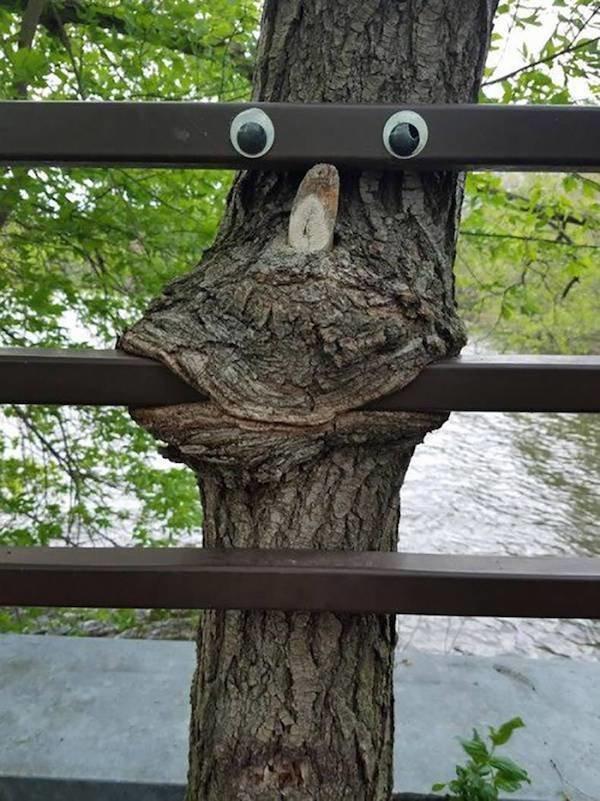 Страшни снимки на гладни дървета, които поглъщат всичко около себе си! Вижте силата на природата! 61