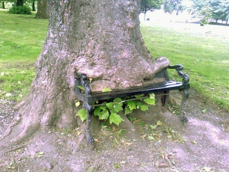 Страшни снимки на гладни дървета, които поглъщат всичко около себе си! Вижте силата на природата! 57