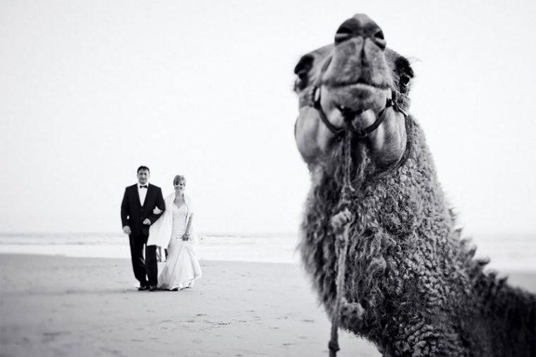 ПОТРЕС! Тези животни провалиха сватбените снимки на тези 11 сватбари.. 34