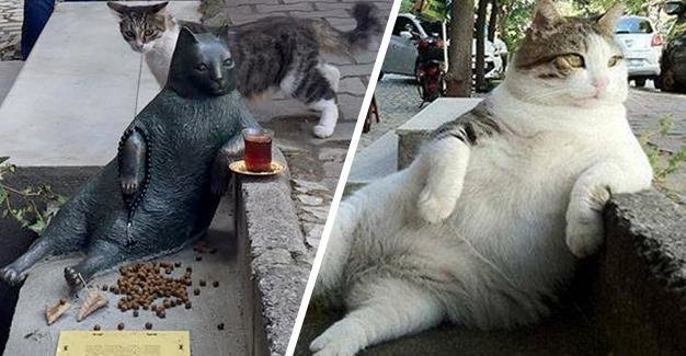 Това са най-известните котки на земята. Няма да повярвате колко различни са.. 61