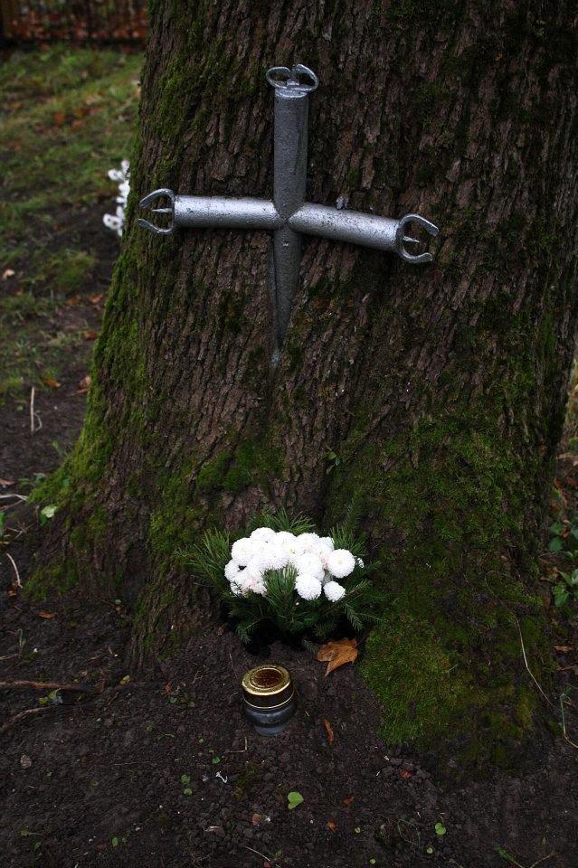 Страшни снимки на гладни дървета, които поглъщат всичко около себе си! Вижте силата на природата! 58