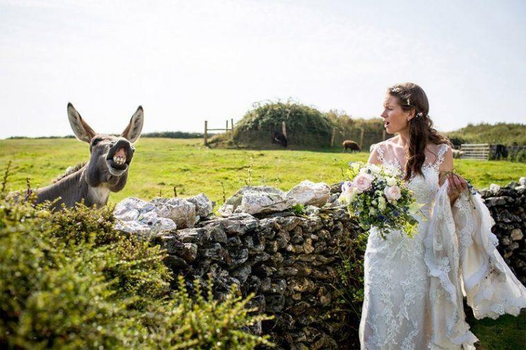ПОТРЕС! Тези животни провалиха сватбените снимки на тези 11 сватбари.. 38