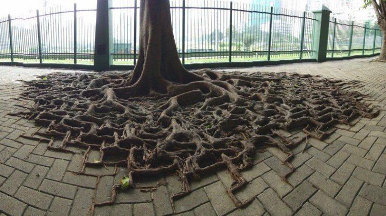 Страшни снимки на гладни дървета, които поглъщат всичко около себе си! Вижте силата на природата! 59