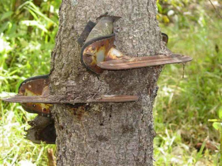 Страшни снимки на гладни дървета, които поглъщат всичко около себе си! Вижте силата на природата! 60