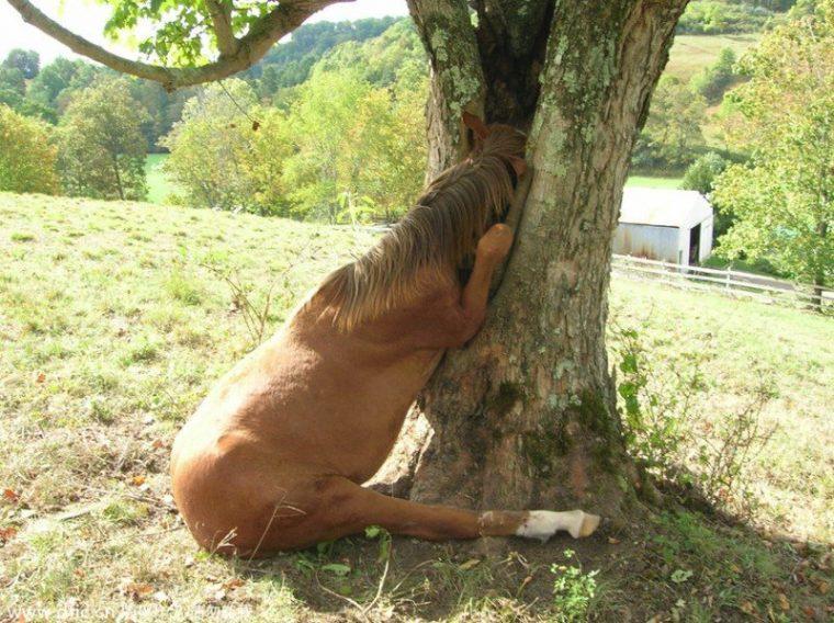 Страшни снимки на гладни дървета, които поглъщат всичко около себе си! Вижте силата на природата! 54