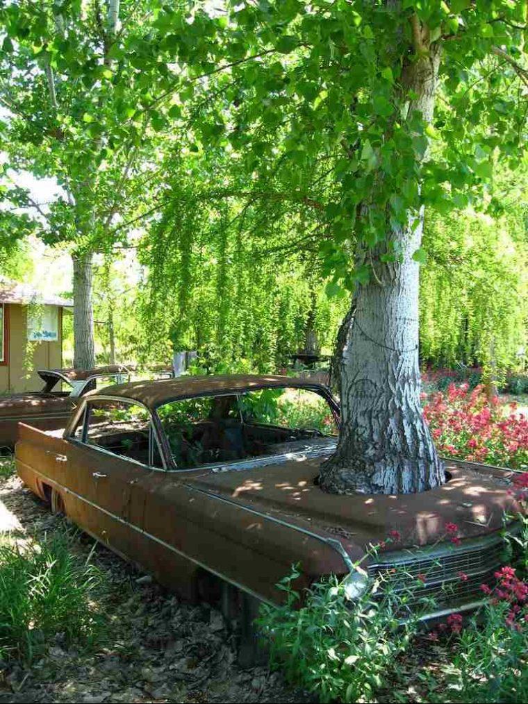 Страшни снимки на гладни дървета, които поглъщат всичко около себе си! Вижте силата на природата! 55