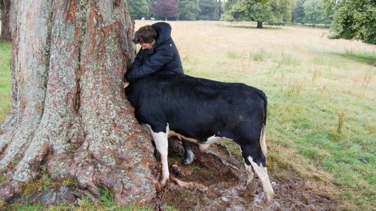 Страшни снимки на гладни дървета, които поглъщат всичко около себе си! Вижте силата на природата! 56