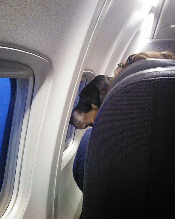 Тези животни за първи път се качват на самолет.. Реакцията им е неописуема... 57