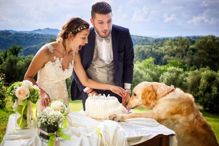 ПОТРЕС! Тези животни провалиха сватбените снимки на тези 11 сватбари.. 39