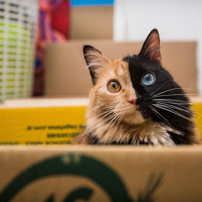 Това котенце е най-рядко срещаното на земята! Няма да повярвате как изглежда сега... 58