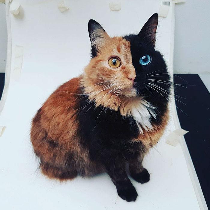 Това котенце е най-рядко срещаното на земята! Няма да повярвате как изглежда сега... 59