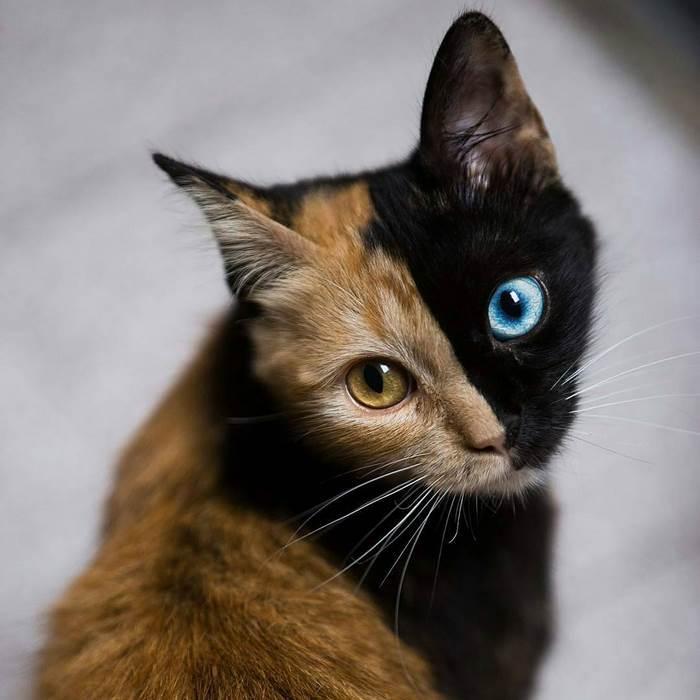 Това котенце е най-рядко срещаното на земята! Няма да повярвате как изглежда сега... 35