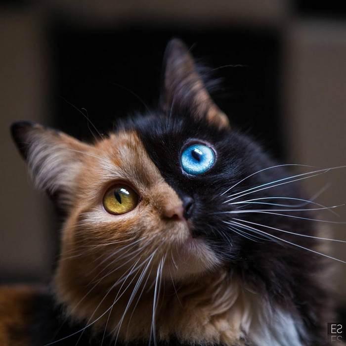 Това котенце е най-рядко срещаното на земята! Няма да повярвате как изглежда сега... 54