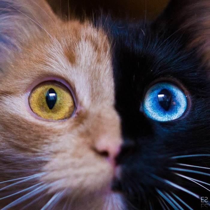Това котенце е най-рядко срещаното на земята! Няма да повярвате как изглежда сега... 55
