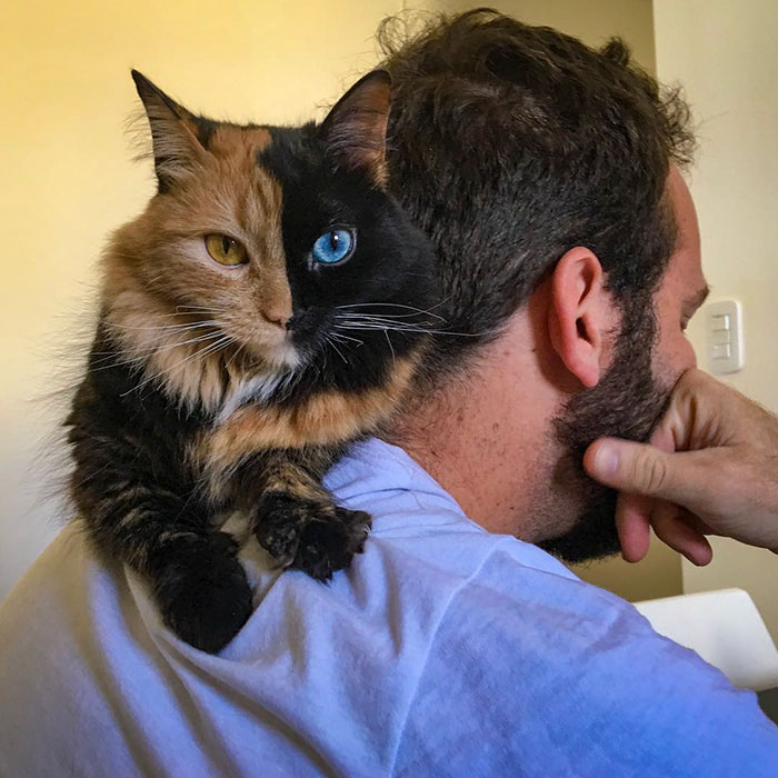 Това котенце е най-рядко срещаното на земята! Няма да повярвате как изглежда сега... 57