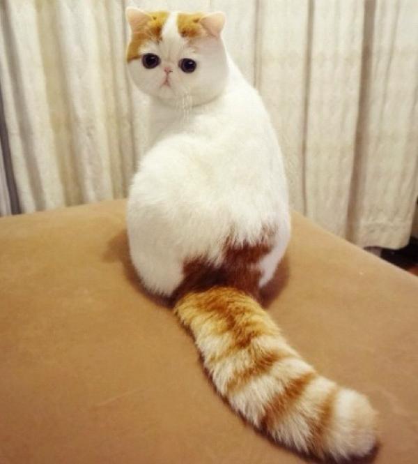 Това са най-известните котки на земята. Няма да повярвате колко различни са.. 63