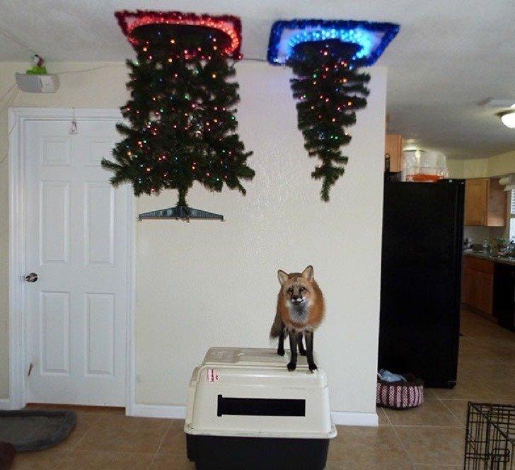 Коледа идва.. Гениални идеи как да опазиш коледната елха от децата и домашните любимци.. 34