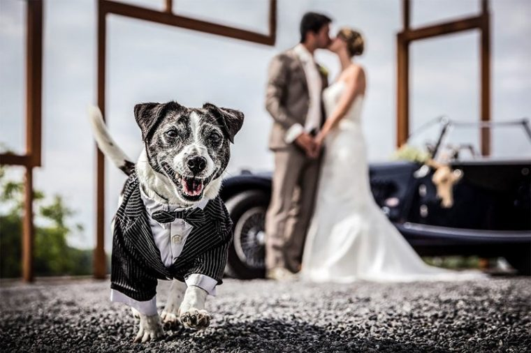 ПОТРЕС! Тези животни провалиха сватбените снимки на тези 11 сватбари.. 40