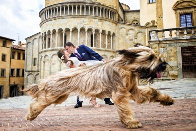 ПОТРЕС! Тези животни провалиха сватбените снимки на тези 11 сватбари.. 41