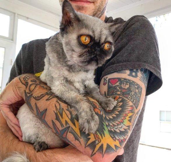Виж как една бездомна котка с лика на куче получи втори шанс за живот! Трогателно.. 35