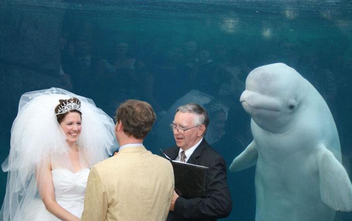 Тези сватбени снимки определено могат да провалят сватбата ви! Не ги допускайте! 11