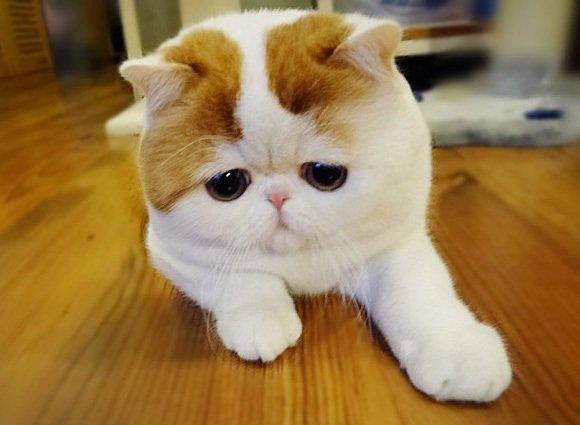 Това са най-известните котки на земята. Няма да повярвате колко различни са.. 65