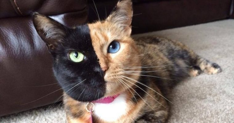 Това са най-известните котки на земята. Няма да повярвате колко различни са.. 66