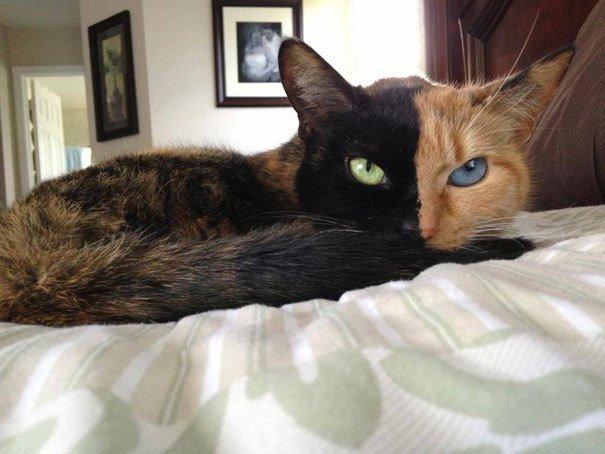 Това са най-известните котки на земята. Няма да повярвате колко различни са.. 68