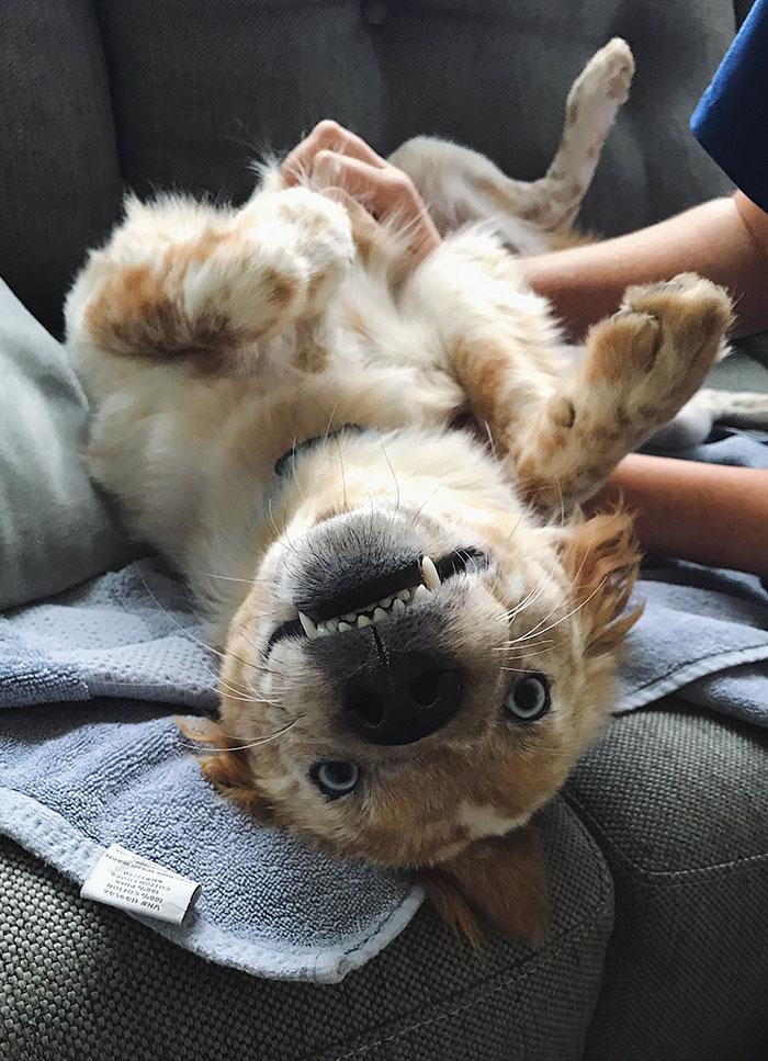 Тя осинови куче за 25-я си рожден ден! Снимките преди и след осиновяването ще те просълзят! Емоционално.. 57