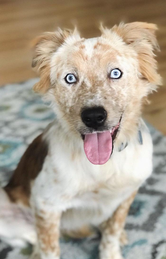 Тя осинови куче за 25-я си рожден ден! Снимките преди и след осиновяването ще те просълзят! Емоционално.. 56